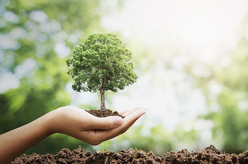 acerca de fertilizantes ungerer